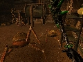 Morrowind 16
