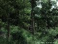 Wald in Cyrodiil